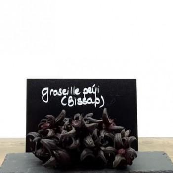 Groseille Péyi