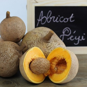 Abricot pays bio