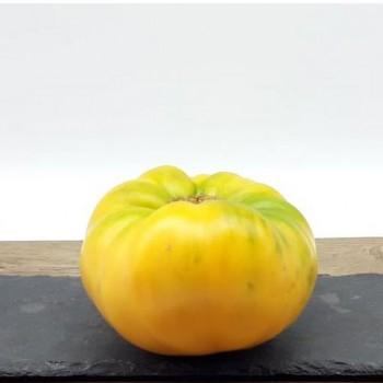 Tomate Jaune Bio