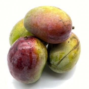 Mangue de Tahïti