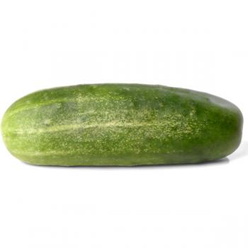 Concombre (bio)