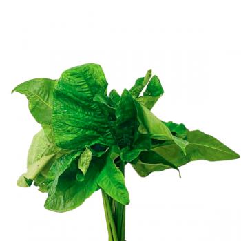 Herbages